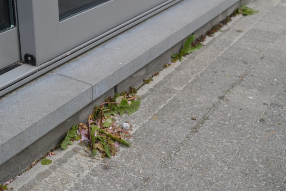 hoe onkruid verwijderen van terras